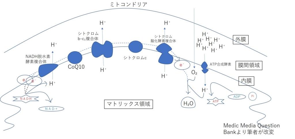 電子伝達系と酸化的リン酸化 - F...