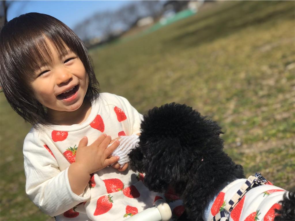 f:id:hirokikawakami:20200306122813j:image