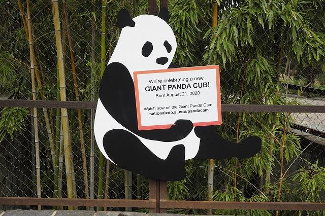 8月21日パンダの赤ちゃん誕生