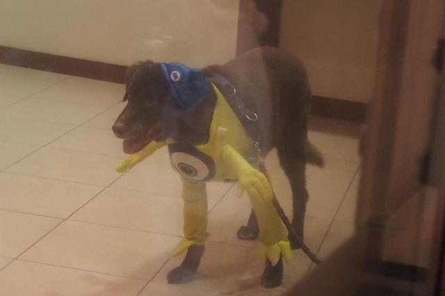 ミニオンの格好の犬
