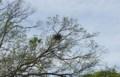 鳥の巣(大阪/住吉)