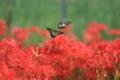 京都新聞写真コンテスト「チョット待って」