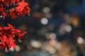 京都新聞写真コンテスト「煌くとき」