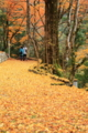 京都新聞写真コンテスト「黄金の絨毯踏みしめて」