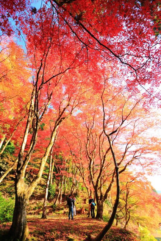 京都新聞写真コンテスト「至福のひと時」