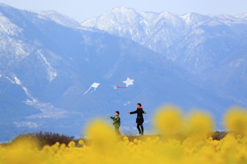 京都新聞写真コンテスト「早春の凧揚げ」