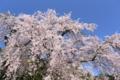京都新聞写真コンテスト「青空に映える」
