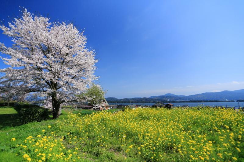 京都新聞写真コンテスト「青天白日」