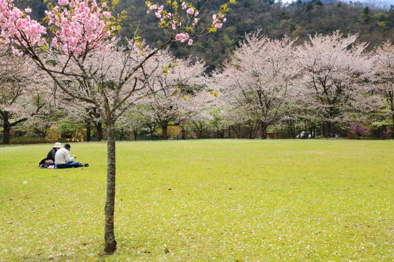 京都新聞写真コンテスト「二人だけの行楽」