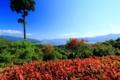 京都新聞写真コンテスト「横一文字」