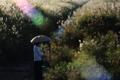 京都新聞写真コンテスト「草原に佇む」