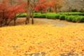 京都新聞写真コンテスト「錦秋の落葉」