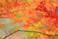 京都新聞写真コンテスト「秋風と共に」