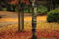 京都新聞写真コンテスト「秋の終わりに」