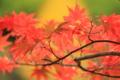 京都新聞写真コンテスト「秋色の盛り」