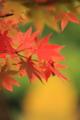 京都新聞写真コンテスト「曇りに輝く」