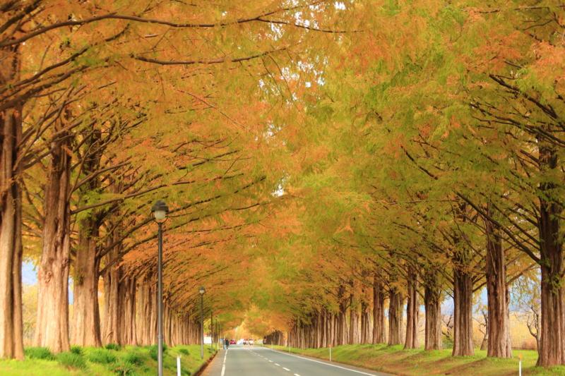 京都新聞写真コンテスト「並木道」