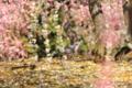 京都新聞写真コンテスト「仲良くしようね」