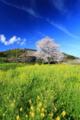 京都新聞写真コンテスト「山里に春が・・・」