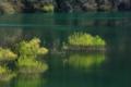 京都新聞写真コンテスト「湖畔の芽吹き」