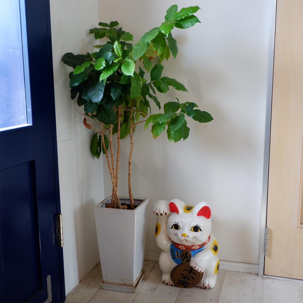f:id:hirorocafe0106:20191012221650j:image