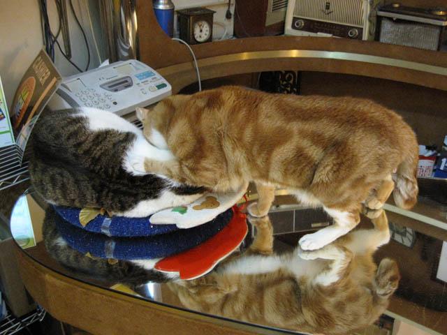 阿猫地攤(Cat Store), #363