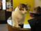 阿猫地攤(Cat Store), #368