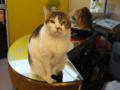 阿猫地攤(Cat Store), #370