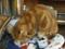 阿猫地攤(Cat Store), #365