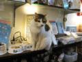 阿猫地攤(Cat Store), #376