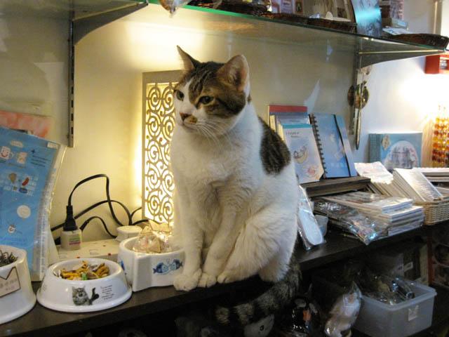 阿猫地攤(Cat Store), #377