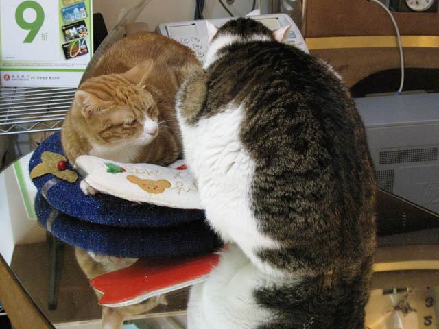 阿猫地攤(Cat Store), #381
