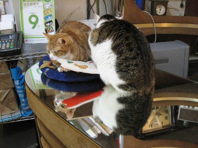 阿猫地攤(Cat Store), #382