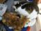 阿猫地攤(Cat Store), #383