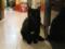 阿猫地攤(Cat Store), #0374