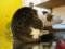 阿猫地攤(Cat Store), #0386