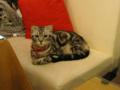 阿猫地攤(Cat Store), #0398