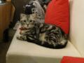 阿猫地攤(Cat Store), #0401