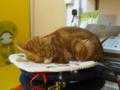 阿猫地攤(Cat Store), #0403
