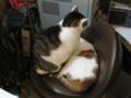 阿猫地攤(Cat Store), #0404