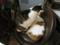 阿猫地攤(Cat Store), #0405