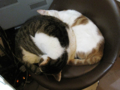 阿猫地攤(Cat Store), #0408