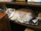 阿猫地攤(Cat Store), #0411