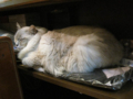 阿猫地攤(Cat Store), #0412