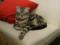 阿猫地攤(Cat Store), #0419