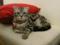 阿猫地攤(Cat Store), #0421