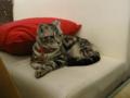 阿猫地攤(Cat Store), #0423