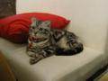 阿猫地攤(Cat Store), #0425