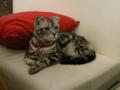 阿猫地攤(Cat Store), #0426