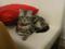 阿猫地攤(Cat Store), #0427